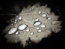 Drops on leaf by RLPhotographs