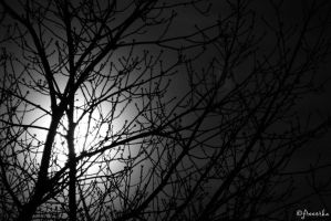 Full Moon in the Tree by freeorka