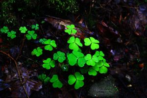 Clovers. by xadriannnai