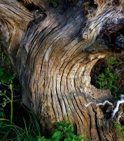 old wood by awjay