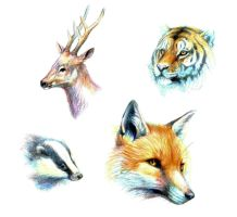 Animal drawings by Maquenda
