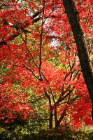 Fall Red by Lunar-Ray