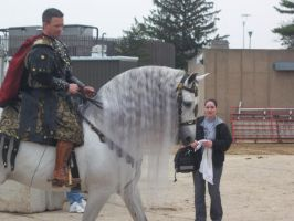 Gray Andalusian Stallion 004 by diamonte-stock