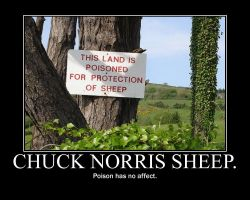 Chuck norris sheep... by coldstar1229