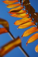 fall leaves by beth4328