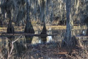 Stock: Swamp 6 by Vesperity-Stock