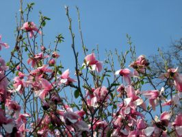 Spring has finally come 4 by csibecsont