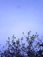 Shred tree in blue by Nicollaos