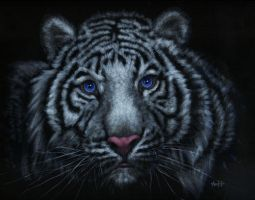 White Tiger by nudge1