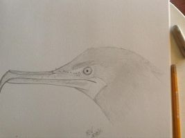 Cormorant by Airgid