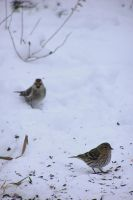 Birds in the Snow by equusstock
