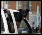 Have Dog Will Travel by jmarie1210