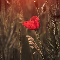 This is the beginning of a beautiful friendship... by ildiko-neer