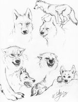 Realistic Wolf Sketch Page by IrkenInvaderTAK