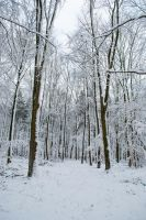 Snowscape Stock 75 by Sed-rah-Stock