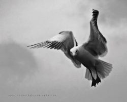 Seagull 01 by TruemarkPhotography