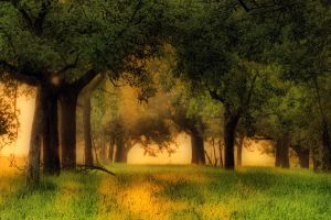 Paradise for deer by tomsumartin