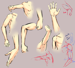 Arm elbow study by moni158
