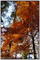 Red Leaves Roof by Hluthvik