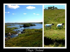 Simply Ireland by Pecetta