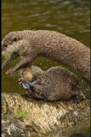 Otters! by Just-the-way-Im-not