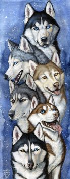 Snow dogs by Anisis