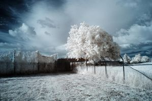 Bosbury Infrared by Dave-Ellis