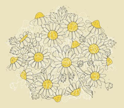 Chamomille flowers by gb-illustrations