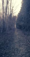 The Mystery That Lies Ahead by MythologicalWonders