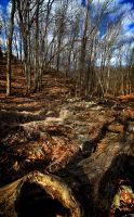 HDR Woods by braxtonds