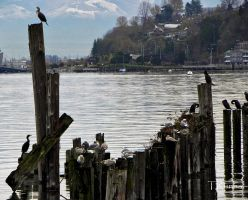 Cormorants and Seagulls by TRunna