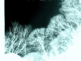 night vision by pmiccich