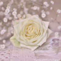 Soft white rose by FrancescaDelfino