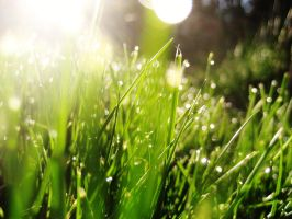 Green Grass Grows by Lin-Z89