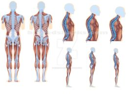 Medical Illustration Project (spinal) by bigredsharks