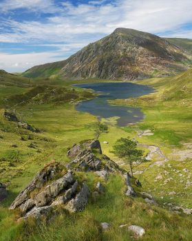 Trees Over Idwal by PastyGuy