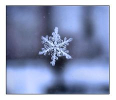 piece of snow by neest