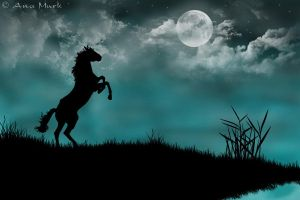 Black horse by KissOnTheRain