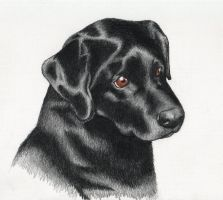 Black lab portrait by crawdadEmily