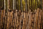 Bamboo Patterns by scottfro
