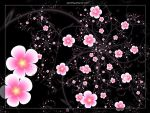Plum blossom by Sophie-Y