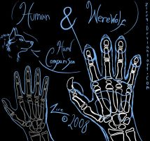 anatomy - werwolf human hand by Zire9