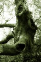 arboreal oddity by sothiss76