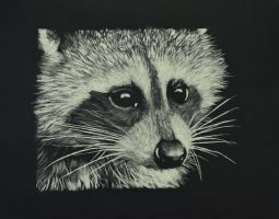 Racoon by A-Gonzo