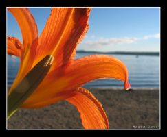 Magog love by RinFlorin