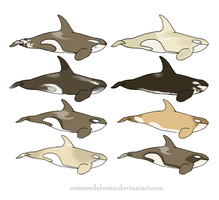 Antarctic (Cappuccino) Orca Adopt: GypsySkye by WeisseEdelweiss
