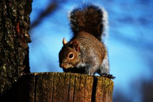 Squirrelbo 5 by tastybedsore
