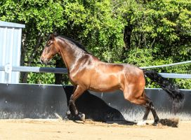 Andalusian stock 19 by xxMysteryStockxx