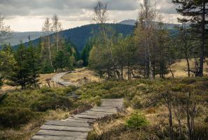 A well-trodden path by erynlasgalenphotoart