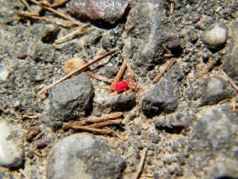 Devil's Lake-- Ity Red Bug by iluvobiwan91